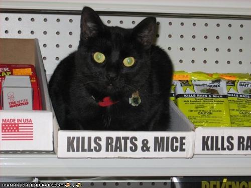 Kills-Rats-and-Mice-60665fd2a1107.jpg