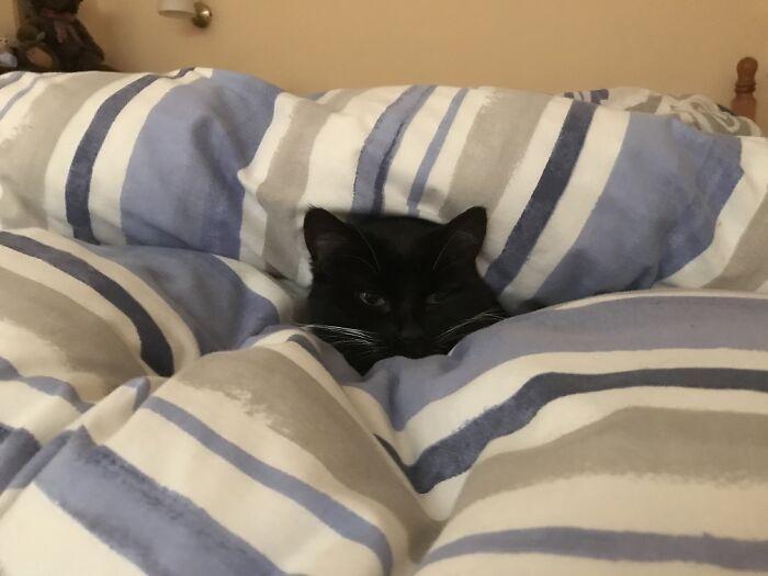 Lollie, Snuggled Up Under The Duvet In Bed.