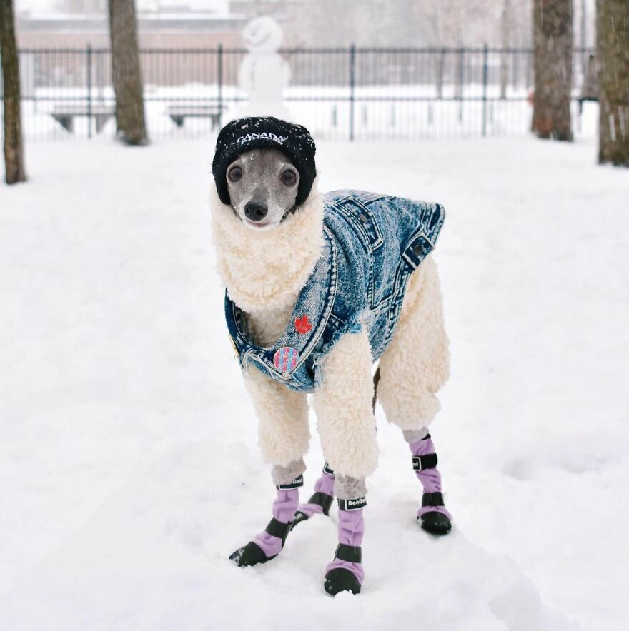 Meet Tika The Iggy, The Biggest Fashion Influencer Of The Moment