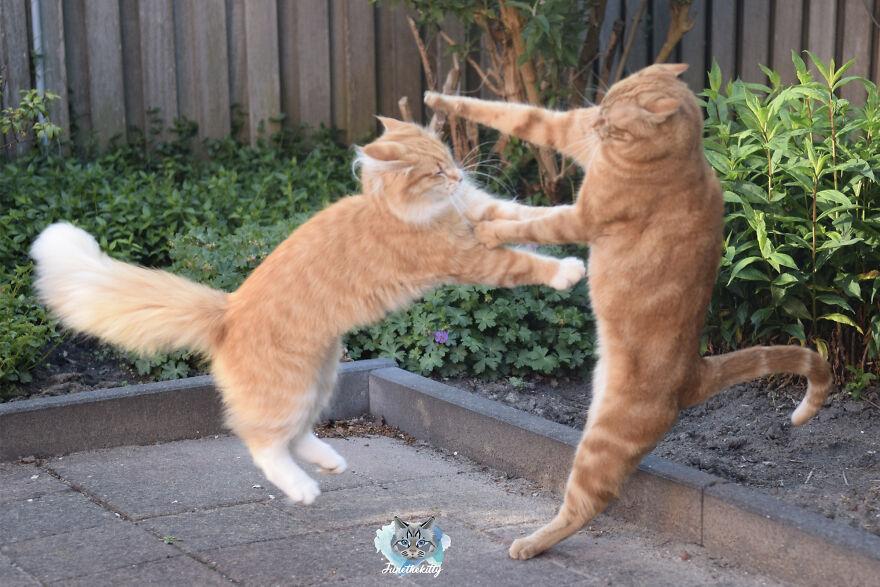 My Cats Are Ninjas
