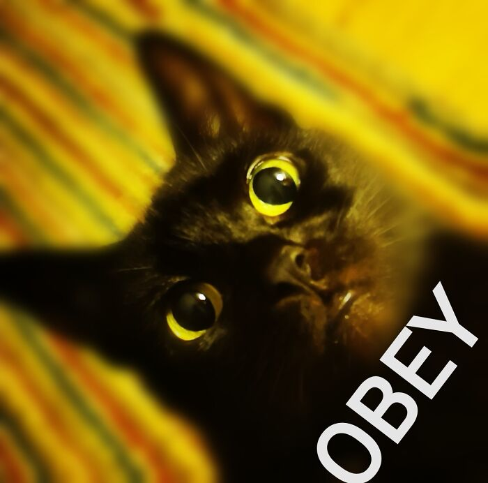 Kitty Obey