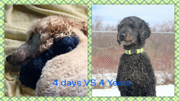 Oscar - 4 Days (With His Mama Olive) vs. 4 Years