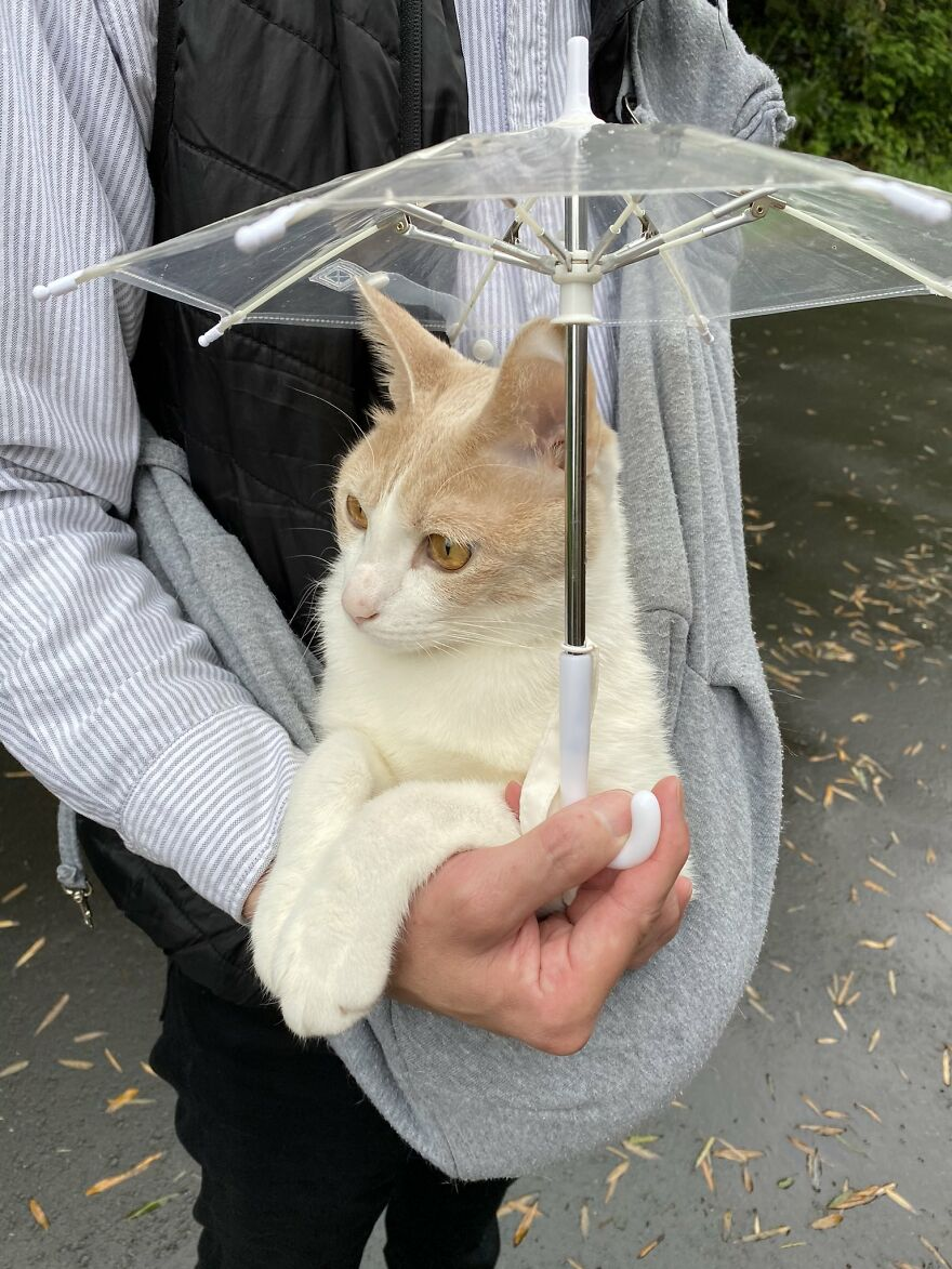 This Japanese Kitten And His Custom-Made Umbrella Will Probably Brighten Up Your Day