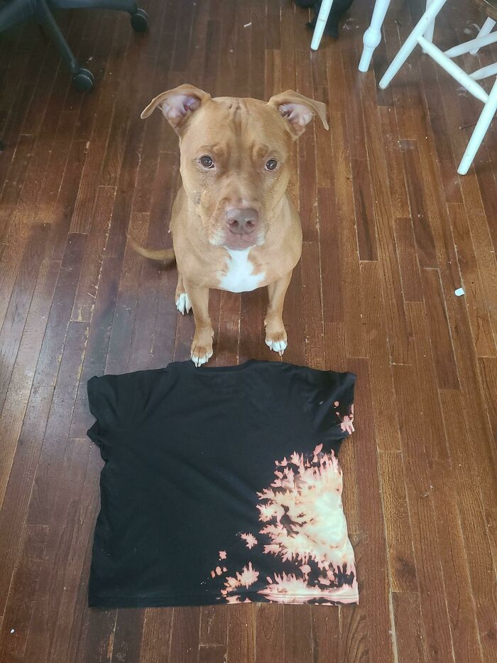 A Dog Creates Accidental Art On A T-Shirt After Knocking Over Bleach On A Pile Of Laundry