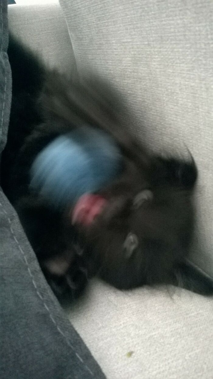 Orion The Kitten Playing With A Fluffy Ball