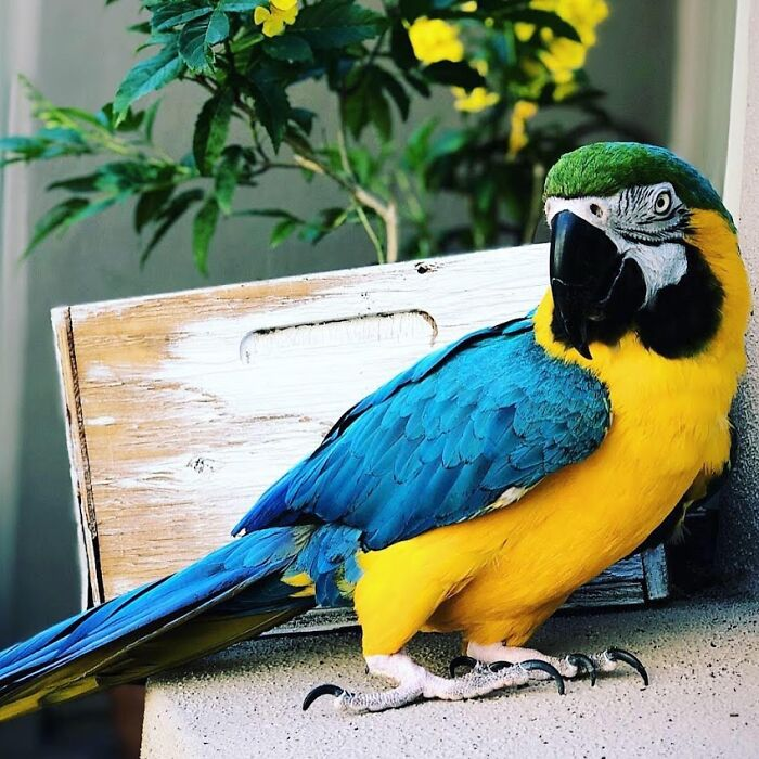 Wendy ... Not Just A Magnificent Blue And Gold Macaw, But My Best Friend Too!