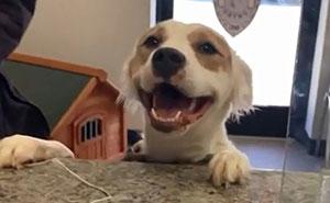 50 Fotos de las adopciones de mascotas más reconfortantes del mes de Abril