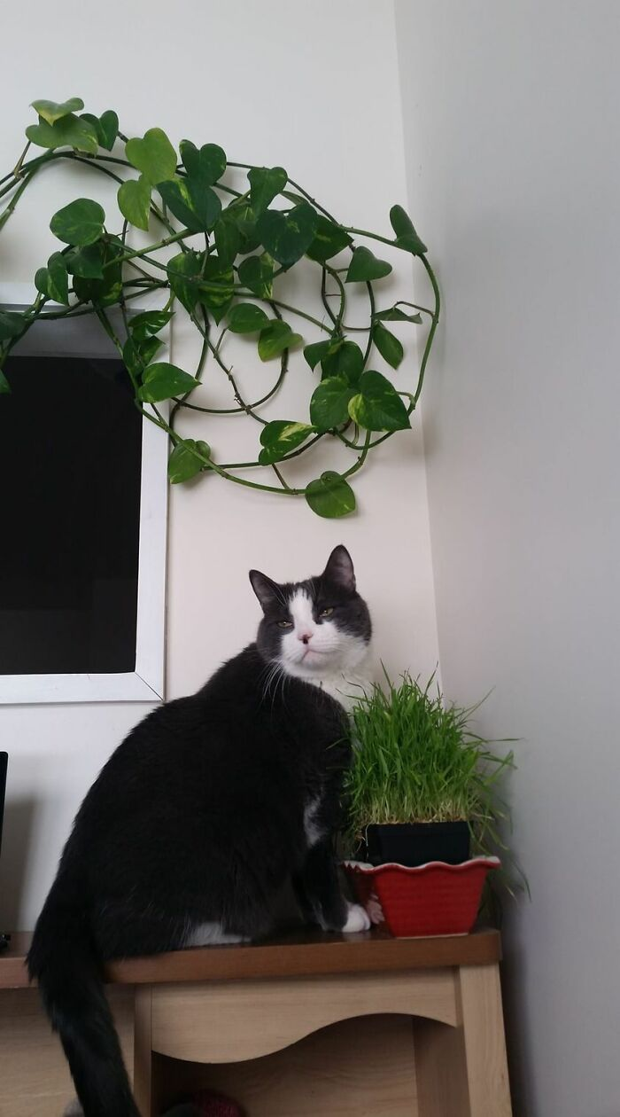 Ash Loves His Cat Grass