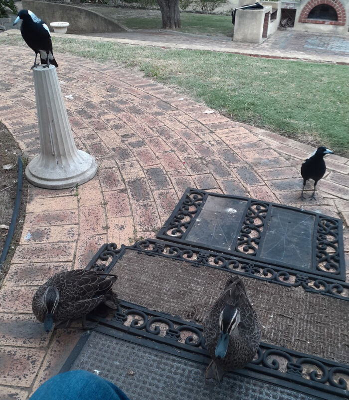 No Pets Right Now, Just Feed The Birds