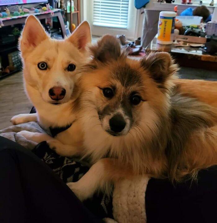 Gypsy And Loki
