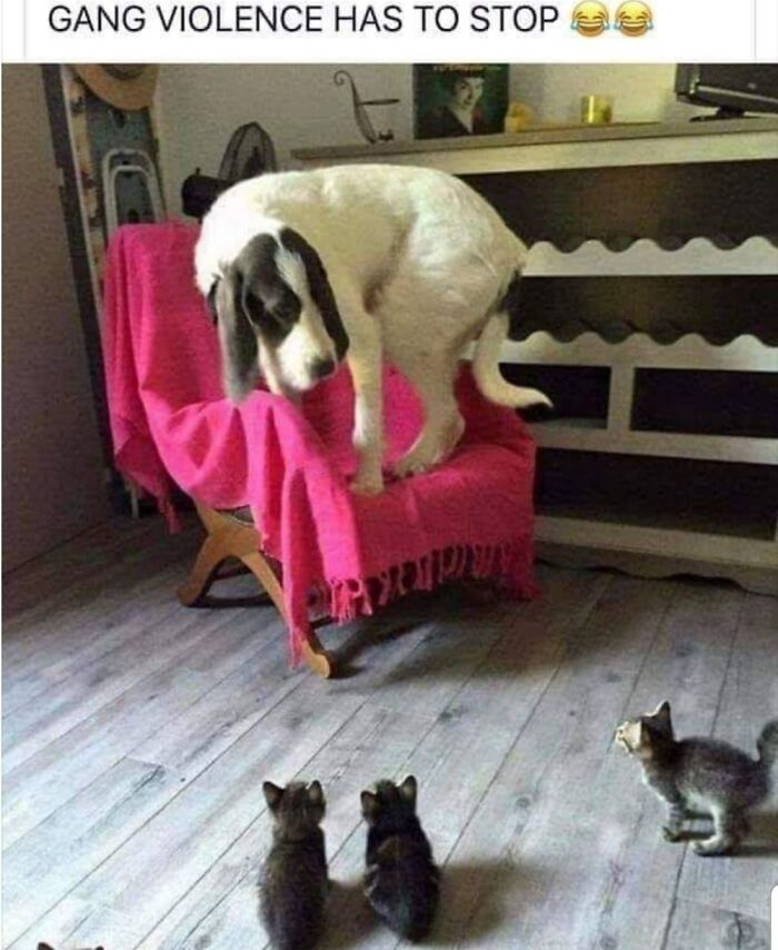 What The What! Stop It Kitties!
