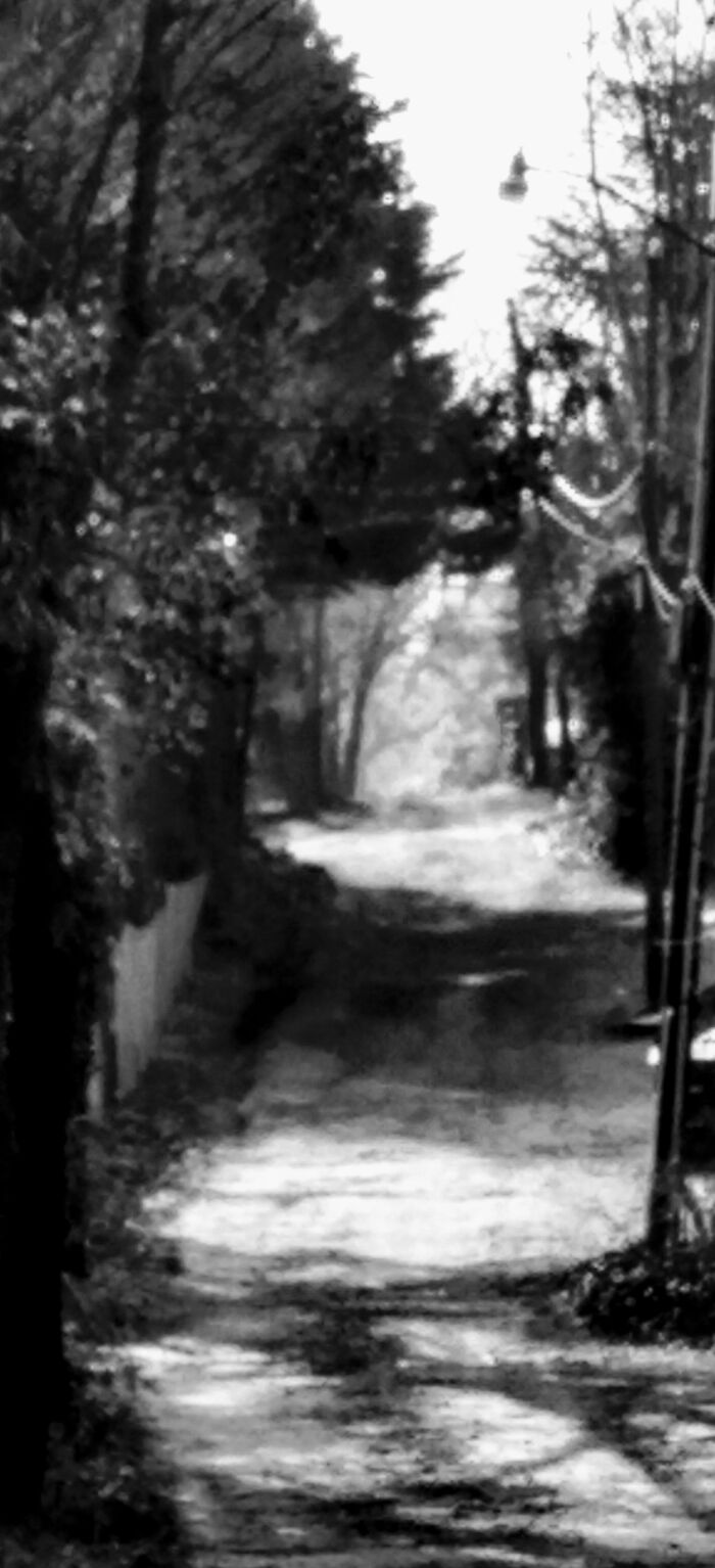Service Alley Behind My House Taken In Black And White