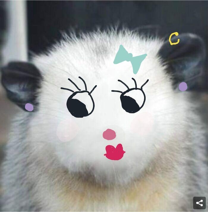 Opossum Diva!