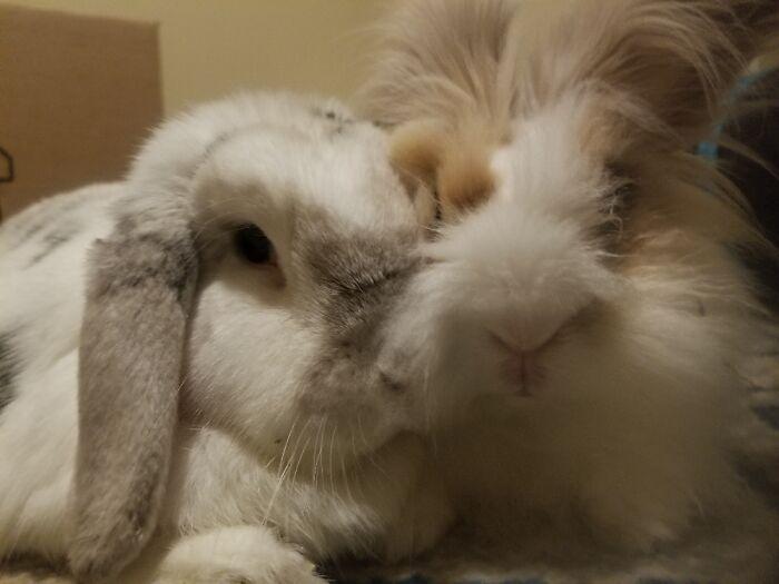 Rosie And Peanut