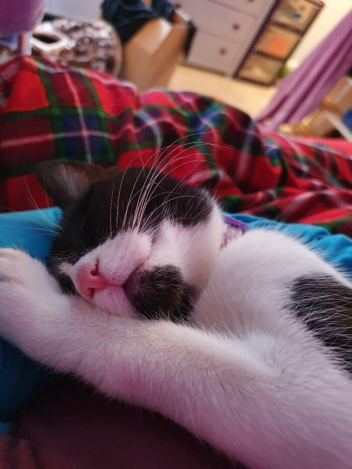 This Is Minerva Smiling In Her Sleep And Showing Off Her Long Whiskers.