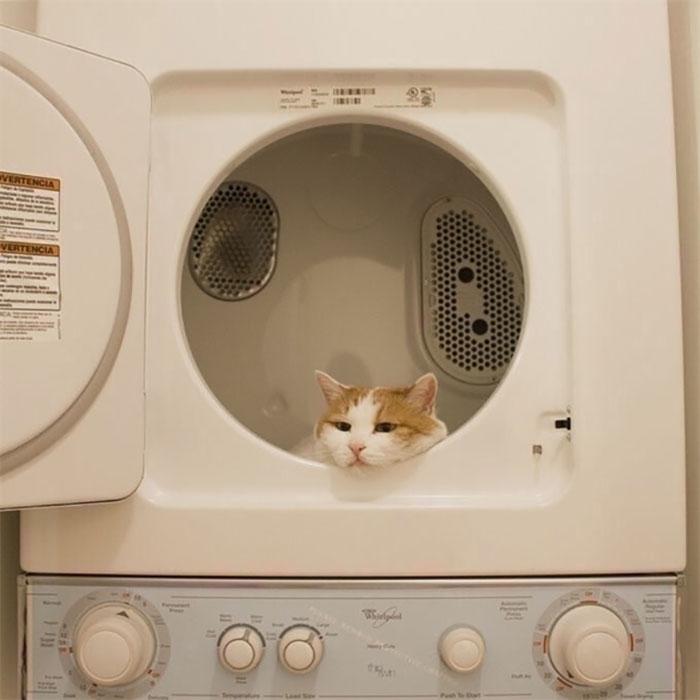 Cats-Random-Places-Pics