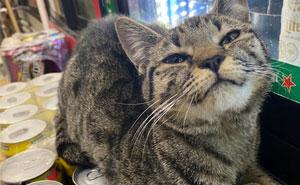 Esta cuenta de Twitter colecciona fotos de gatos en tiendecitas actuando como si fueran los dueños (50 fotos nuevas)