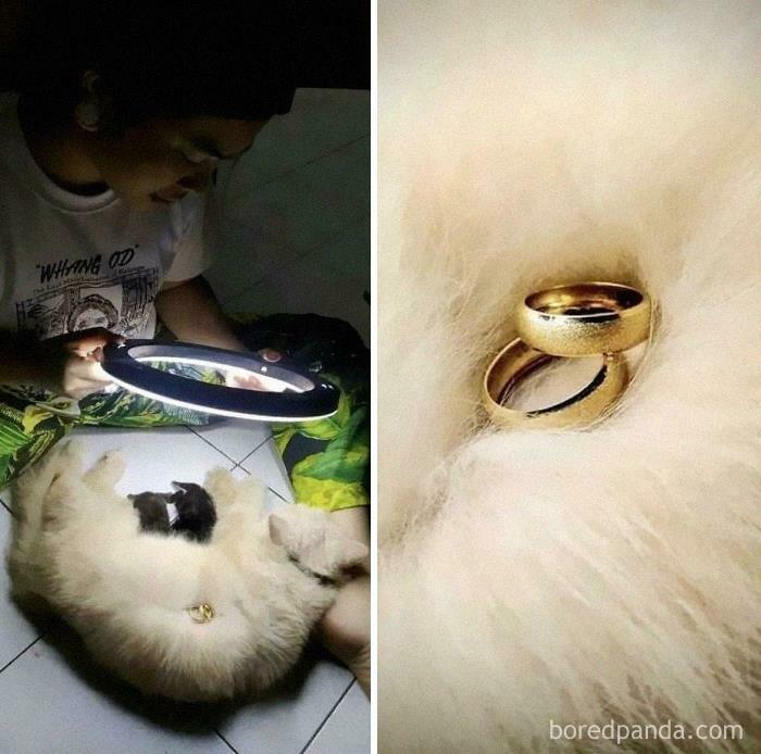Cat Helping Owner Sell Jewelry