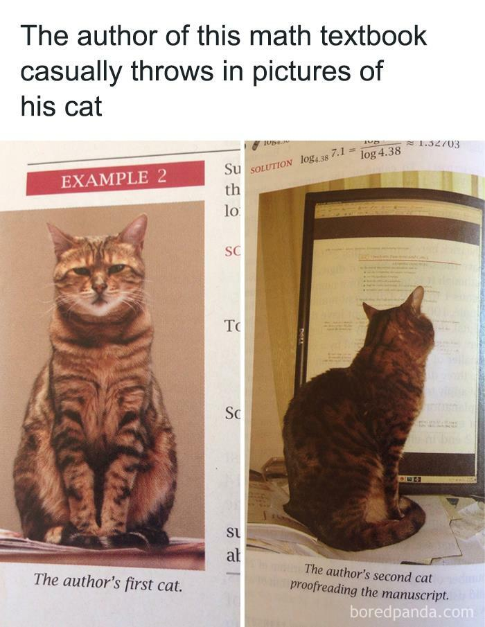 Academe Cat Portraying For, And Proofreading Book