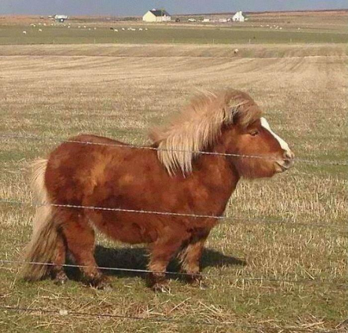 This Weapon Of A Pony