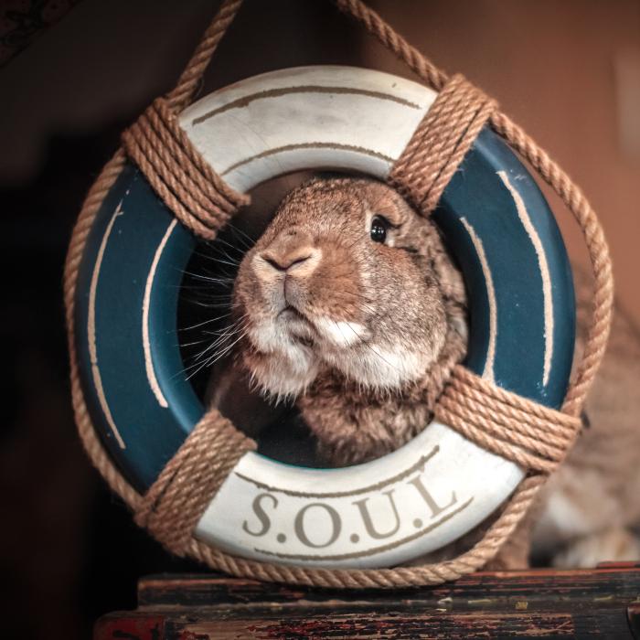 My Trained Bunny Jūris