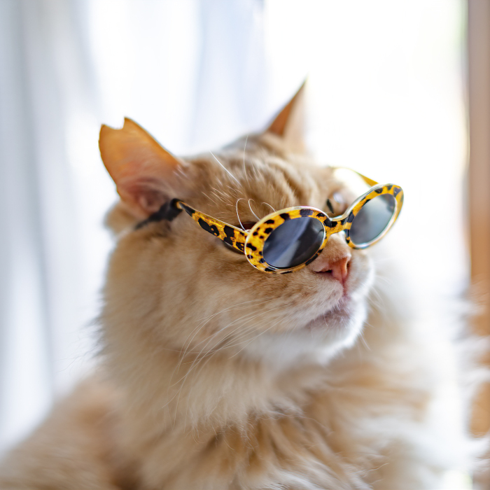I Took Photos Of My Cats Wearing Glasses (10 Pics)