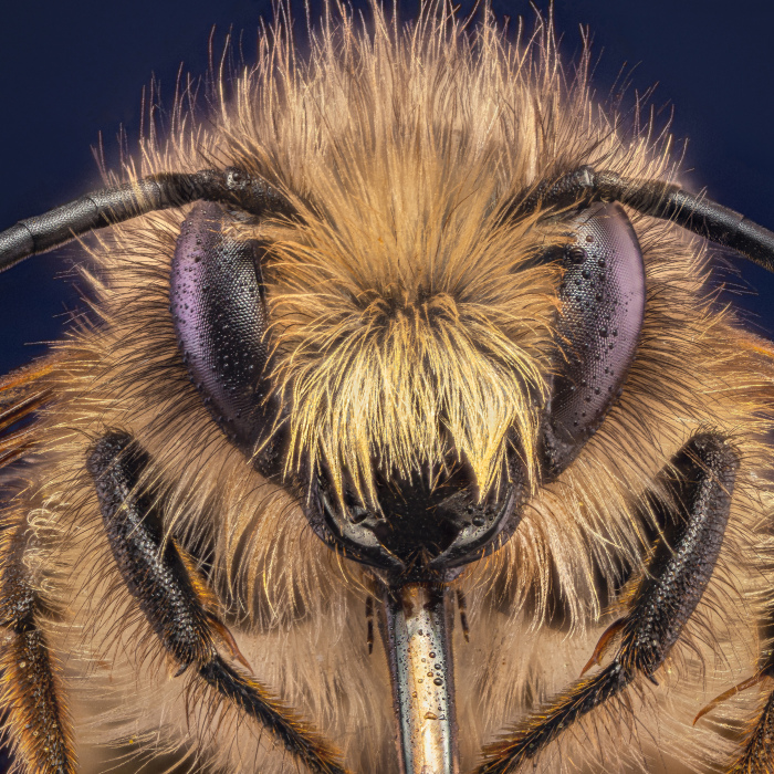 Some Insects Portraits I Took