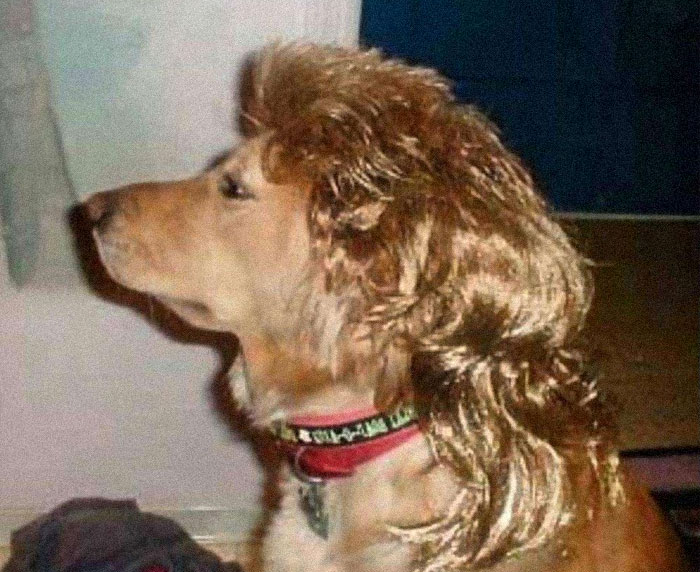 Dogs-With-Mullets
