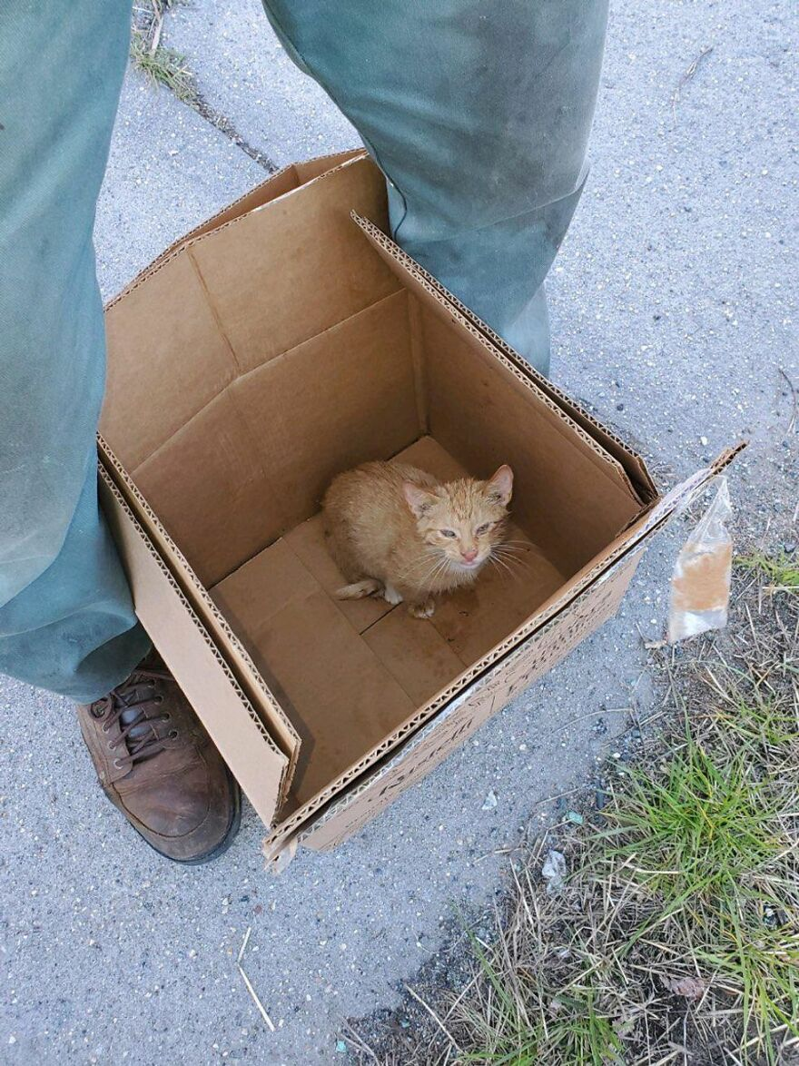 Two Unsuspecting Sanitation Workers Find A Cat In A Garbage Bag, Rescue Him, And Find Him A Shelter