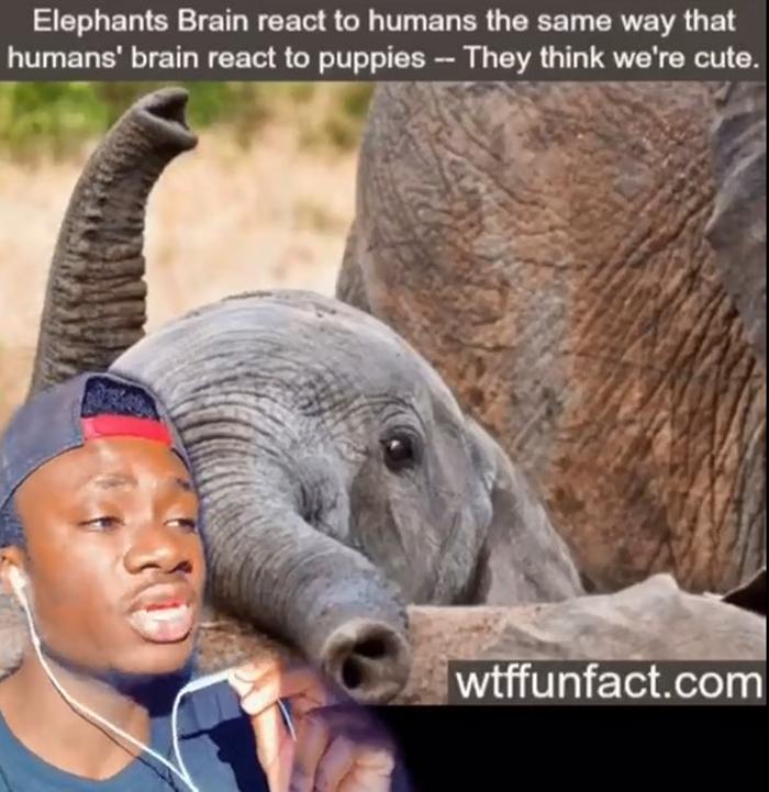 False-Animal-Facts-People-Believe