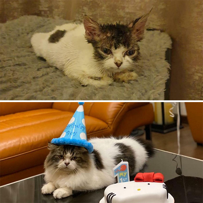 Miffy's Transformation! He Recently Turned 1!