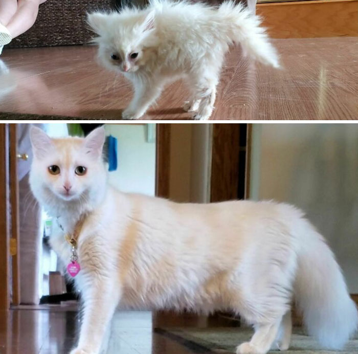 There Was A Time When We Weren't Sure If Nimbus Was Even A Cat. Here Is Her Successful Transformation From Crinkled Tissue To Fluffy Goddess
