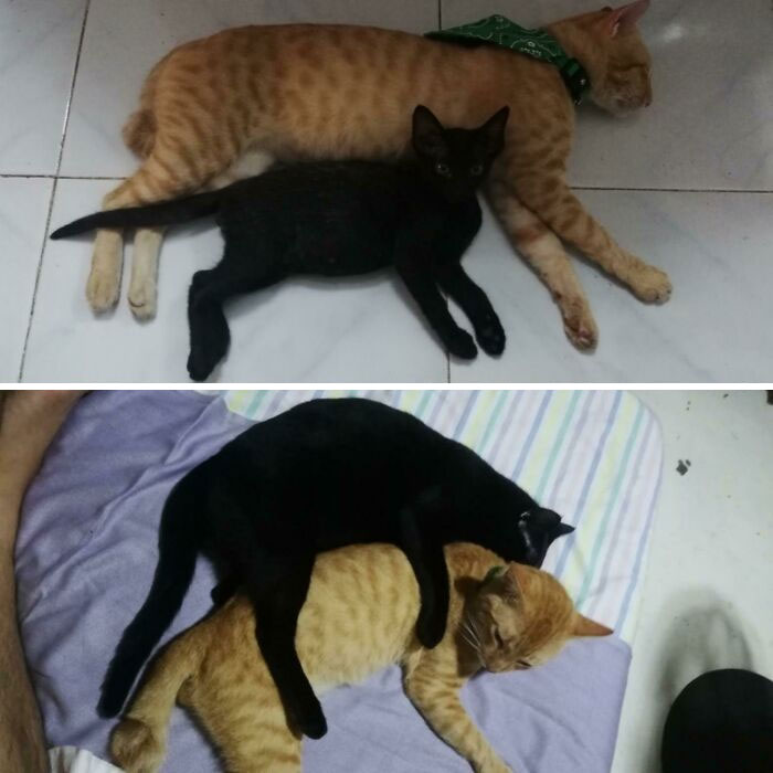 From Big Spoon To Little Spoon In 10 Months