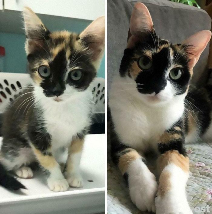 Piko. She Grew Into Her Bobblehead