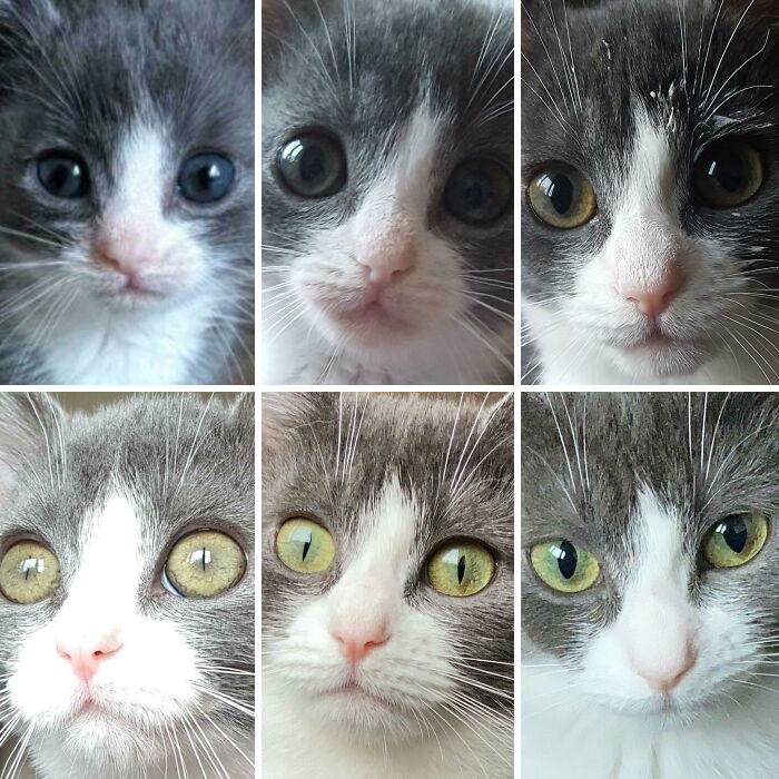 The Evolution Of Eye Color (2-10 Months)