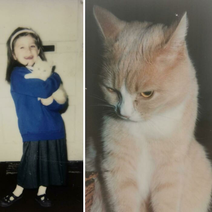 I Got My Cat Alfie When I Was 4 As A Gift On My First Day Of School And He Died When I Was 20. We Were Inseparable! I'm 27 Now And I Still Think Of Him All The Time. Until I See You Again My Boy
