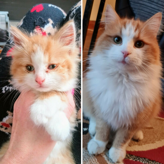 My Baby Boy, The Day I Found Him And Now, 18 Months Later
