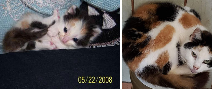 Please Meet Lucy. She'll Be 12 Years Old This Year. We Found Her In A Dumpster At A Taco Bell