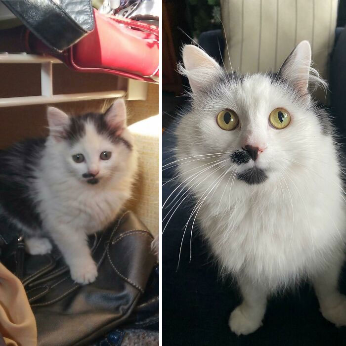 He Was Born In A Bush In Our Backyard. The Day My Mom Brought Him Inside To 6 Years Later, Stache Man!