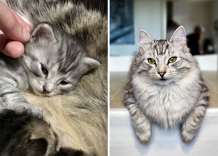 Then And Meow