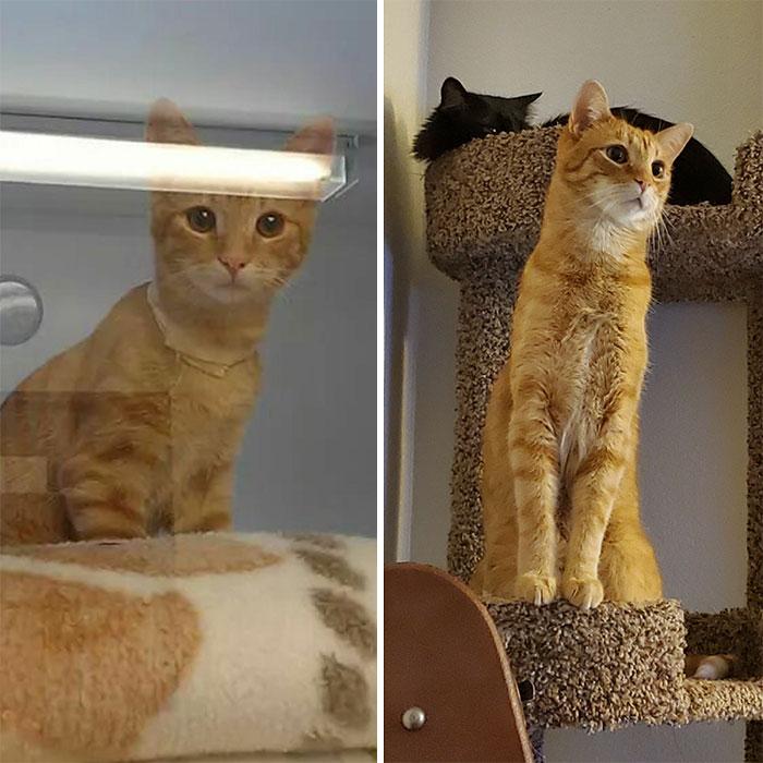 Concerned Shelter Kitten To Concerned Tall Boy (7yo)