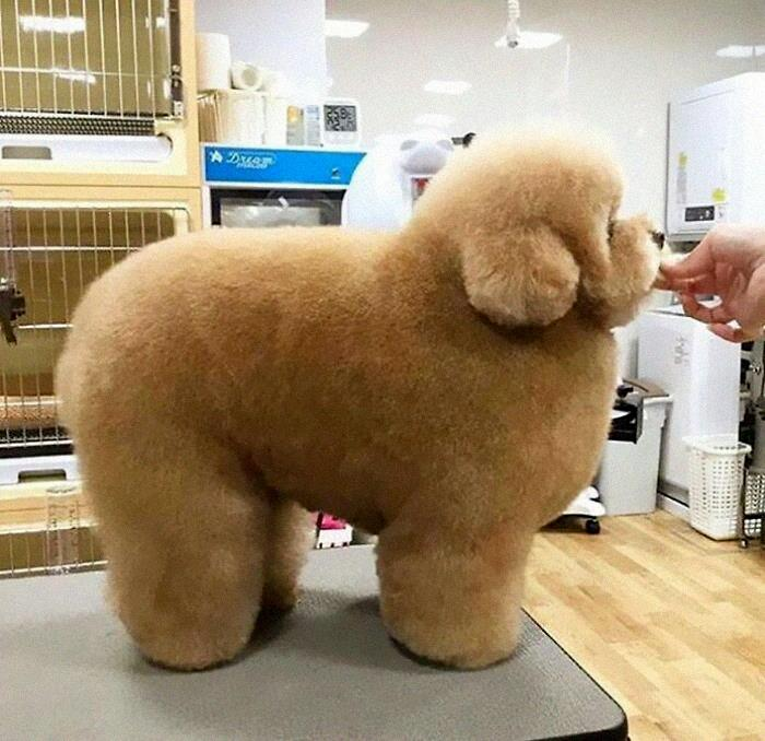 The Amount Of Fluff On This Dog