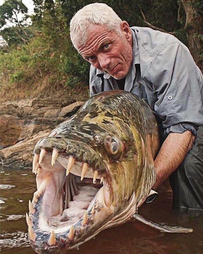 The Goliath Tiger Fish