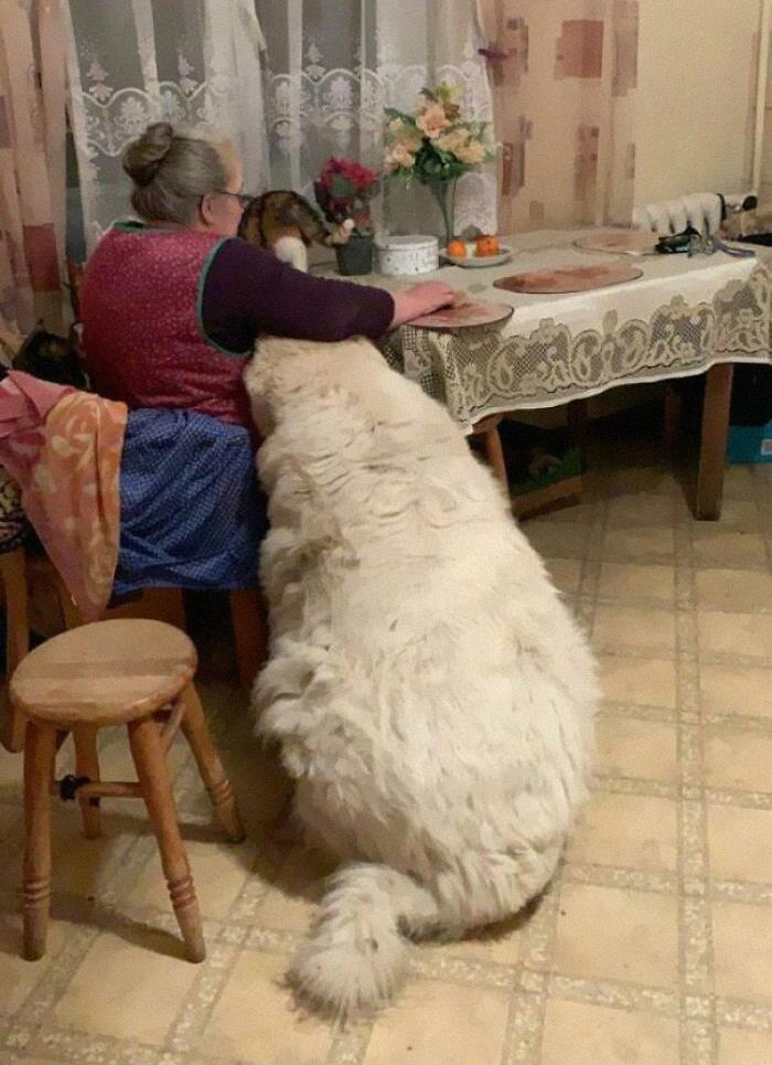 This Chonker Next To My Grandmother