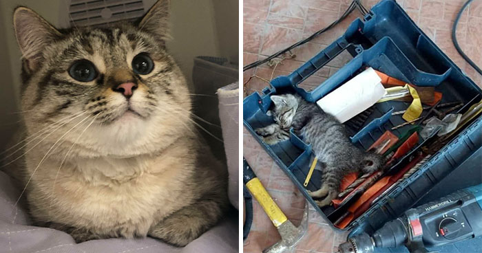 This Online Group Is Dedicated To Cats With Jobs, And Here Are 38 Of Them