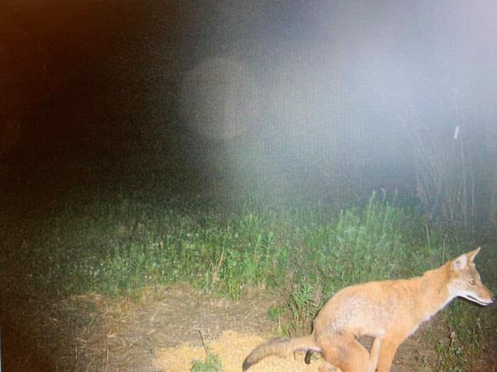 I've Waited A Long Time For The Perfect Place To Unveil This Gem Of A Trail Camera Photo. Thrilled This Group Exists