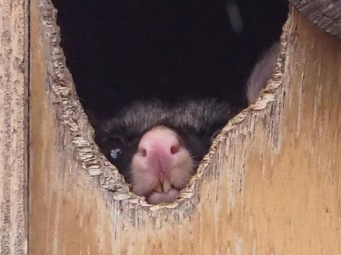 A Friend's Photo Of The Same Possum Looked So Cute, But Mine Just Turned Out Like This