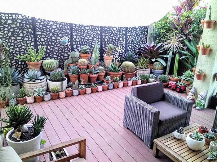 Tried To Organize My Patio Cactus/Succulent Garden