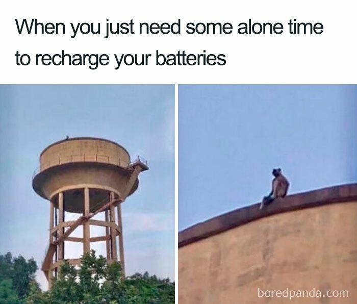 Hilarious-Introvert-Memes