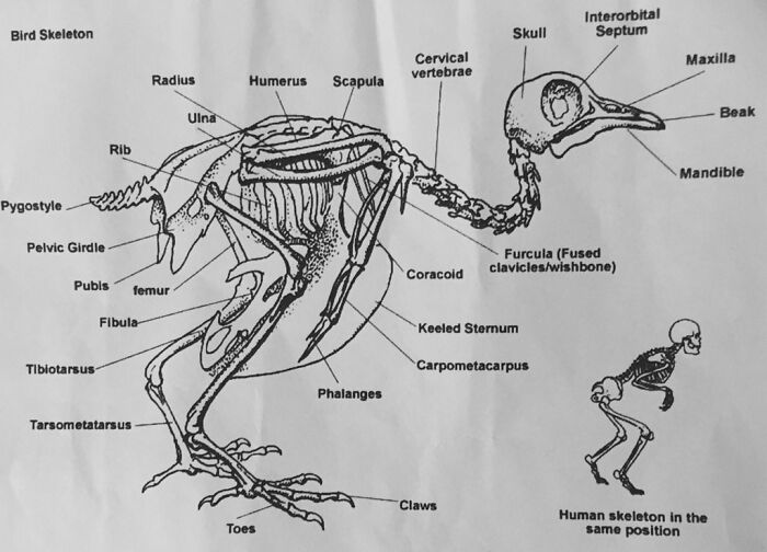 50 Bizarre Science Diagrams That Are Actually Real, As Shared On This Page